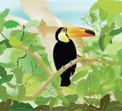 美冠鹦鹉密林 免版税图库摄影