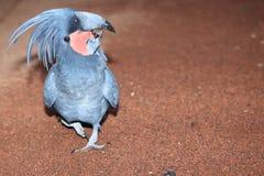 美冠鹦鹉掌上型计算机 图库摄影