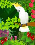 美冠鹦鹉森林 免版税图库摄影