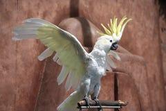 美冠鹦鹉飞过 免版税库存照片