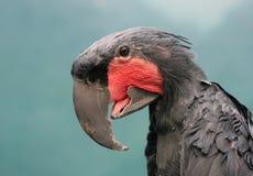美冠鹦鹉鹦鹉纵向 免版税库存照片