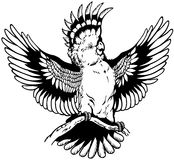 美冠鹦鹉黑白色 库存照片