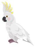 -美冠鹦鹉-被隔绝的动画片鹦鹉 免版税图库摄影