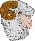 美利奴绵羊的Ram绵羊头图画 库存照片