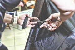 美发师剪在美容院的一根妇女长的头发 库存照片