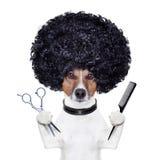 美发师剪梳子狗 库存图片