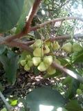 美味和美丽的树和果子 免版税库存图片