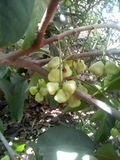 美味和美丽的树和果子 库存照片