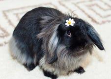美味的兔子 库存照片