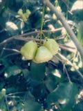 美味的果子 免版税图库摄影