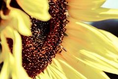 美味的蜂蜜 库存图片