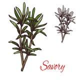 美味调味料植物传染媒介剪影植物象 库存例证