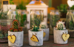 美味,小的多汁植物和仙人掌用不同的具体的罐 库存图片