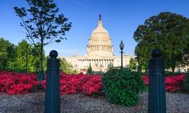 美国与杜娟花的国会大厦大厦 库存图片