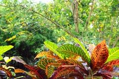 美国中央密林墨西哥尤加坦 免版税库存图片