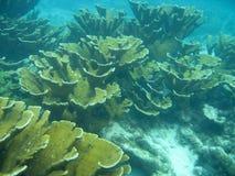 美国伯利兹中央珊瑚 免版税库存照片