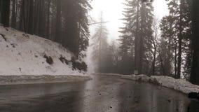 美国加州红杉公园 图库摄影