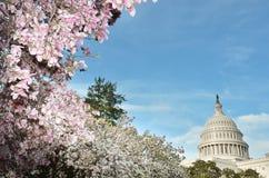 美国国会大厦大厦在春天,华盛顿特区,美国 库存照片