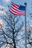美国国旗、星条旗,吹在风,坐在一棵不生叶的树的鸟在背景,中间地区中 免版税库存照片