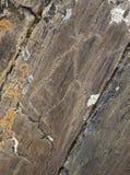 美国当地刻在岩石上的文字 免版税图库摄影