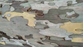 美国梧桐树皮 免版税库存图片