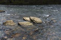 美国梧桐浅滩国家公园, Elizabethton, TN 免版税库存照片