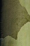 美国梧桐platan树吠声纹理  库存图片