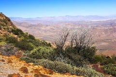 美国沙漠 免版税库存照片