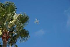 美国海岸卫队与棕榈树的飞机飞行 图库摄影