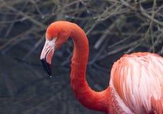 美国火鸟 免版税库存照片