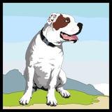 美国牛头犬 向量例证