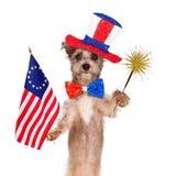 美国独立纪念日庆祝狗 库存照片
