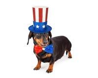 美国独立纪念日达克斯猎犬狗 免版税库存照片