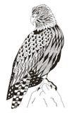 美国白头鹰坐岩石, zentangle传统化了, vecto 库存图片