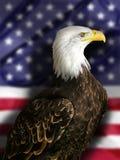 美国白头鹰标志 免版税库存图片
