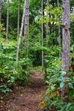 美国的深落叶林在与路的10月 库存照片