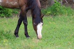 美国短距离冲刺的马 免版税库存图片