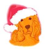 美国美卡犬放下佩带的圣诞老人帽子 库存照片