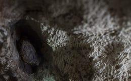 美国蟾蜍 免版税库存照片