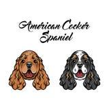 美国西班牙猎狗 与两个西班牙猎狗狗的象 也corel凹道例证向量 免版税图库摄影