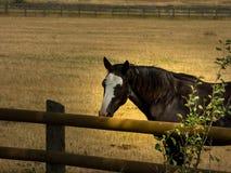 美国马季度 免版税图库摄影