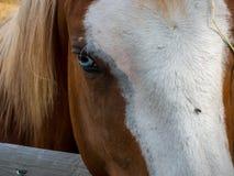 美国马季度 图库摄影
