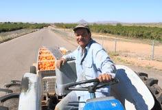 美国,亚利桑那:橙色果树园工作者 免版税库存图片