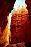 美国黄松介于中间的峭壁在布赖斯峡谷 库存照片
