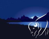 美国水牛或北美野牛在晚上 图库摄影