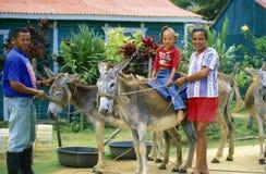 美国CARIBBIAN海多米尼加共和国 库存图片