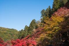 美好和五颜六色的秋天风景 库存照片