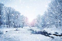 美好和多雪的冬天森林背景 免版税库存图片