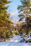 美好和安静的冬天风景 免版税库存图片