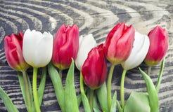 美好开花在木背景的白色和红色郁金香花 背景背景卡片设计花卉例证 背景蓝色云彩调遣草绿色本质天空空白小束 与bea的春天背景 免版税图库摄影